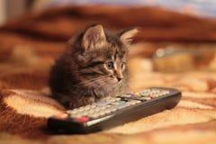 与遥控的小猫 库存照片