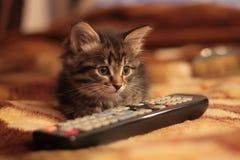 与遥控的小猫 免版税库存图片
