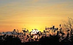 与遮荫树和鸟的早晨阳光 免版税库存图片