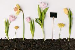 与郁金香、水仙、菊花花和空白的黑板的平的位置在白色隔绝的地面 图库摄影