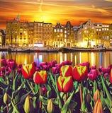 与郁金香和大厦的不可思议的风景在阿姆斯特丹, Netherla 图库摄影