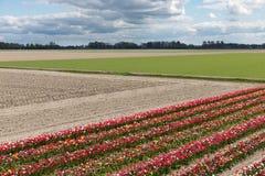 与郁金香展示庭院的荷兰风景 免版税库存照片