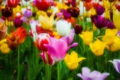 与郁金香的五颜六色的花卉题材在软的样式 库存照片