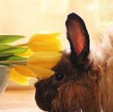 与郁金香的兔子 免版税库存照片