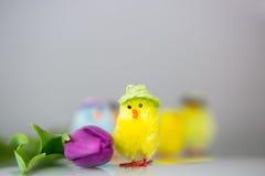 与郁金香的小鸡 免版税库存照片