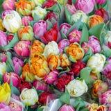 与郁金香的花束待售 免版税图库摄影