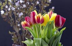 与郁金香的花束 免版税库存照片