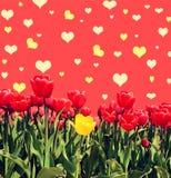与郁金香的Abstrakt背景招呼的与愉快的Valent 免版税库存图片