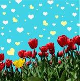 与郁金香的Abstrakt背景招呼的与愉快的Valent 免版税库存照片