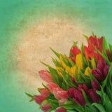 与郁金香花的花卉边界 照片减速火箭的样式 免版税库存照片