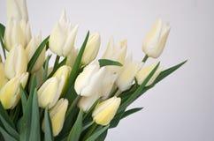 与郁金香雪夫人经典胜利白色的花束 免版税库存图片