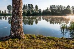 与部族图片的杉木树干 免版税库存图片