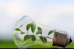 与里面一棵生长植物的电灯泡 免版税库存图片