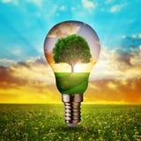 与里面树的Eco电灯泡在日落 库存图片