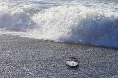 与里面珍珠的公海壳 免版税库存照片