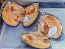 与里面珍珠的珍珠贝壳 免版税图库摄影