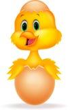 与里面逗人喜爱的鸟动画片的破裂的鸡蛋 免版税库存图片