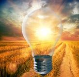 与里面阳光的电灯泡 免版税图库摄影