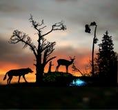 与野生动物和树剪影的黑暗的夜森林风景  库存照片