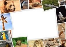 与野生动物的汇集的框架 免版税库存照片