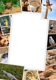 与野生动物的汇集的框架 免版税库存图片