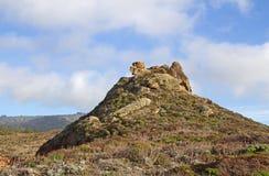 与野生植物的岩石 图库摄影