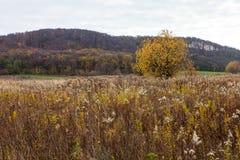 与野生植物的无教养的农业领域 库存照片
