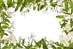 与野生植物的框架在白色背景 库存照片