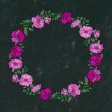 与野生玫瑰的圆的框架 夏天开花贺卡或婚礼背景 象查找的画笔活性炭被画的现有量例证以图例解释者做柔和的淡色彩对传统 乱画样式 黑公猪 图库摄影