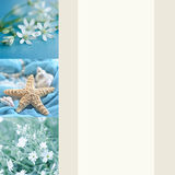 与野花、贝壳和海星的明信片与文本的空间 假期,放松,旅行的概念 图库摄影