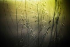 与野花和植物剪影的抽象自然背景 免版税库存图片