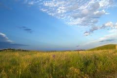 与野花的大草原风景 免版税图库摄影