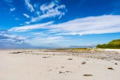 与野花的桑迪海湾 库存照片