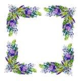 与野花的花卉框架 皇族释放例证
