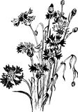 与野花的葡萄酒花卉构成 免版税库存照片