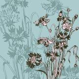 与野花的葡萄酒花卉构成 库存图片