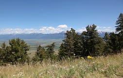 与野花的蒙大拿风景 免版税库存照片