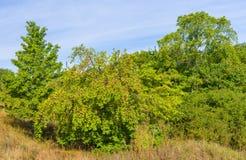 与野苹果树的乌克兰风景 免版税库存图片