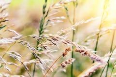 与野草的自然背景 免版税库存图片