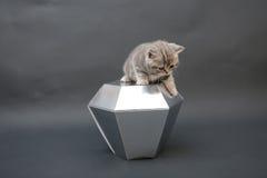 与金刚石玩具的逗人喜爱的小猫 免版税库存照片
