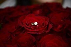 与金刚石的金黄圆环在101朵玫瑰 库存图片