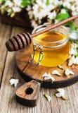 与金合欢开花的蜂蜜 库存图片