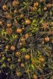 与金球的圣诞树 免版税图库摄影