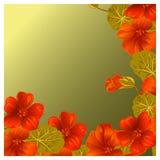 与金莲花的背景设计卡片和邀请的 库存照片
