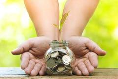 与金钱、保存的金钱和生长手的树 生长企业成长和植物的财政耕种从硬币的在玻璃 免版税图库摄影