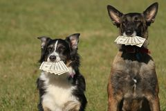 与金钱的狗 免版税库存照片