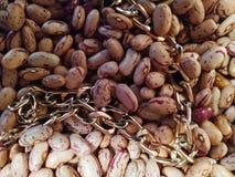 与金链子的豆在好日子 图库摄影