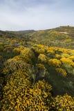 与金雀花densus灌木的风景 免版税库存照片