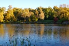 与金黄叶子的树在池塘附近 水表面  库存图片