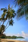 与金黄沙子,绿色棕榈树,蓝色海,晴朗的天空,白色云彩背景的偏僻的海滩 库存图片